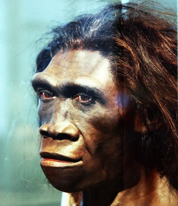519px-Homo_erectus_adult_female_-_head_model_-_Smithsonian_Museum_of_Natural_History_-_2012-05-17